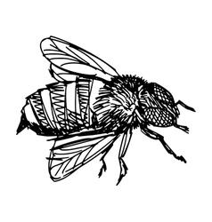 working bee vector image