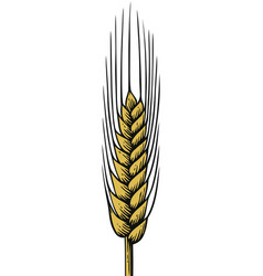 wheat vintage engraved vector image