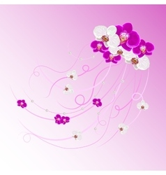 arrangement orchid flowers and pearls vector image