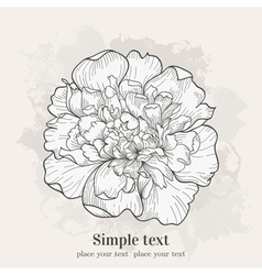 Background with single peony Hand drawn vector