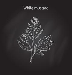 White mustard sinapis alba vector