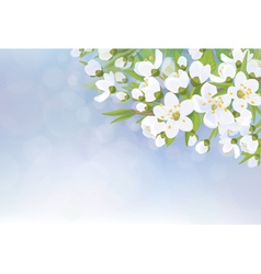 flowers tree spring vector image vector image