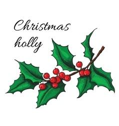 Hand drawn Holly Christmas mistletoe plant vector image vector image
