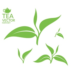 Tea Isolated leaves on white background vector image vector image