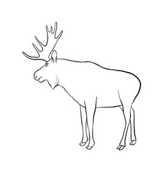 drawing elk vector image