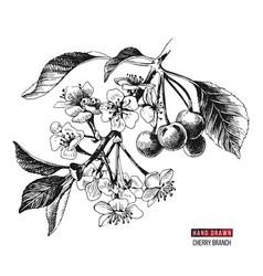 Hand drawn cherry branch vector