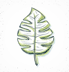 Isolated palm leaf handmade in sketch style vector