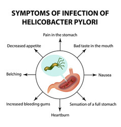 symptoms of infection of helicobacter pylori vector image