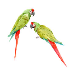 watercolor green parrots vector image