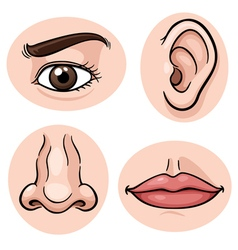 Body part vector image