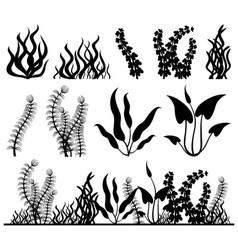 Sea plants and aquarium seaweed set vector