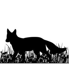 Fox in the meadow vector