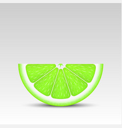 Realistic lime slice vector