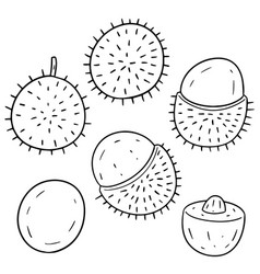 set of rambutan vector image