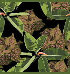tropical bright ficus elastic and exotic plants vector image