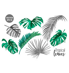 tropical leaf monstera palm monochrome set vector image vector image