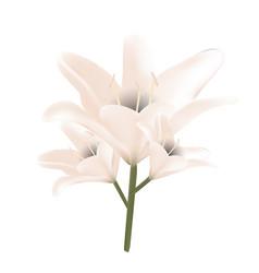 bouquet of pastel lilies vector image