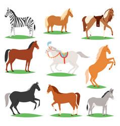 Horse animal horse-breeding or vector