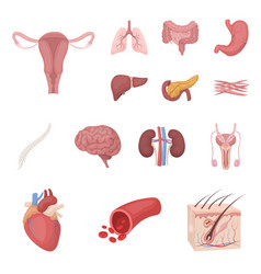 Internal organs of a human cartoon icons in set vector