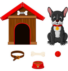 set of dog accessories vector image