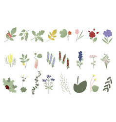 set of flowers leaves and plants vector image