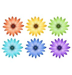 Six colorful flowers vector