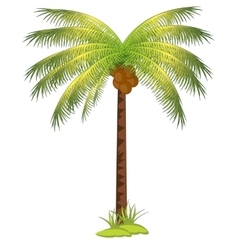 Palm with coco vector image vector image