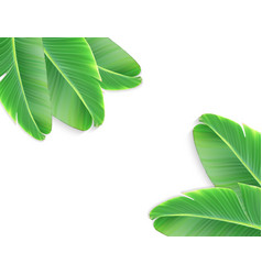 a naturalistic leaf a banana palm with flower vector image