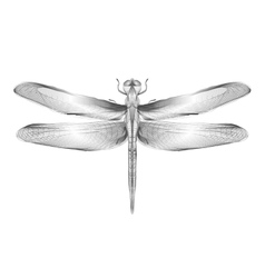 Dragonfly 3d style for print vector