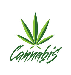 lettering cannabis for ads logo banners vector image