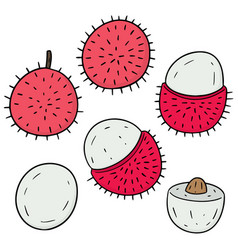 set of rambutan vector image