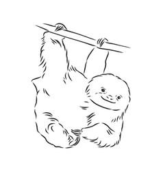 Sloth outline sloth sketch vector