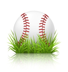 Baseball on grass vector image vector image