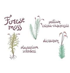 Forest moss set vector