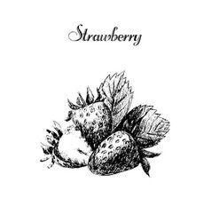 Ink hand drawn vintage strawberry vintage fruit vector