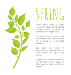 spring birch brunch with green leaves poster text vector image