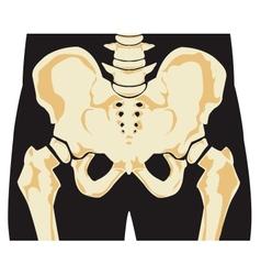 Human skeleton vector image vector image