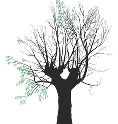 Young leaves on the old tree vector image vector image