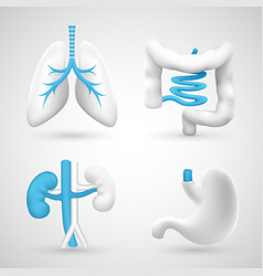 human organs on a white background gray objects vector image