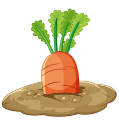 Carrot root in soil cartoon style isolated vector