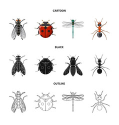 Insect and fly sign vector