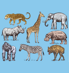 set african animals rhinoceros elephant vector image