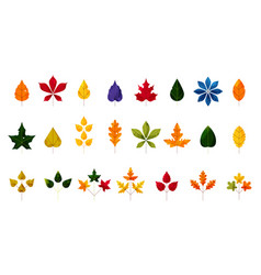 fall and autumn leaves colorful autumn leaf set vector image