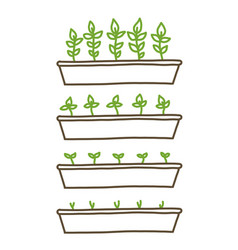 growing seedlings stages plant shoots tray vector image