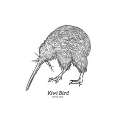Kiwi bird hand draw sketch vector