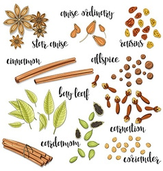 Set of spices in the sketch Anise cardamom vector