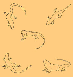 lizards sketch by hand pencil drawing by hand vector image vector image