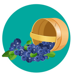 wooden underlying basket with blueberries vector image