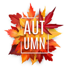 Autumn leaf poster with fall season foliage vector