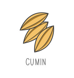 Cumin line cooking isolated vector